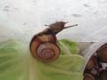 Snail, #8308