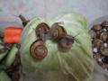 Snail, #8314