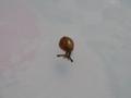 Snail, #8423 (Closeup)