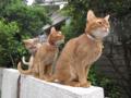 Beatrice, Elisabetta & Caterina, #0638