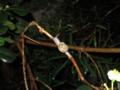 Snail, #9197 (Closeup)