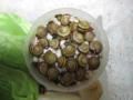 Snail, #8501