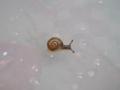 Snail, #8563 (Closeup)