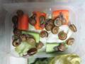 Snail, #8737