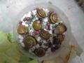 Snail, #8983