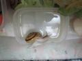 Snail, #8989