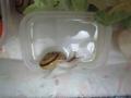 Snail, #8990