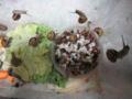 Snail, #8976