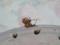 Snail, #9025 (Closeup)