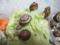Snail, #9088 (Closeup)
