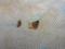 Unexpected Eggs of Snail, #9091 (Closeup)