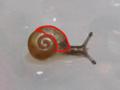 Snail, #8563 (Marking)