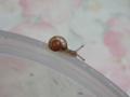 Snail, #9459 (Closeup)