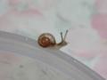 Snail, #9460 (Closeup)