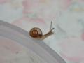 Snail, #9461 (Closeup)