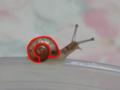 Snail, #9462 (Marking)