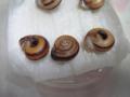 Snail, #9754