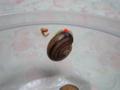 Snail, #9806