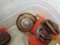 Snail, #9889 (Closeup)
