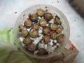 Snail, #9899