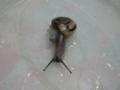 Snail, #A167(Closeup)