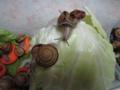 Snail, #A240