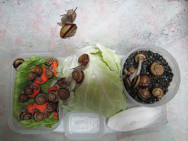 Snail, #A243