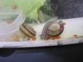 Snail, #A282