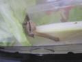 Snail, #A284