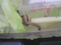 Snail, #A285