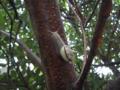 Snail, #A342