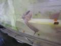 Snail, #A426