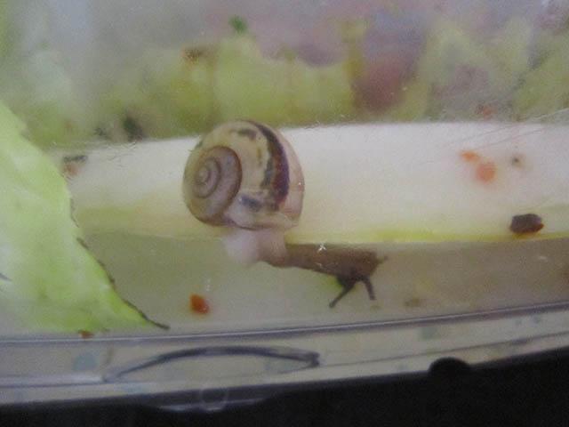 Snail, #A430