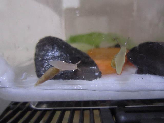 Snail, #A382