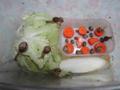 Snail, #A513