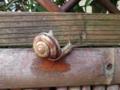 Snail, #0136 (Closeup)