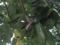 Snail, #B307 (Closeup)
