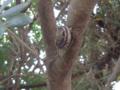 Snail, #B382 (Closeup)