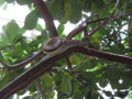 Snail, #B525 (Closeup)
