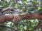 Snail, #B530 (Closeup)