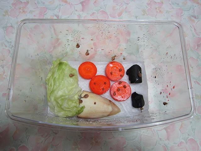 Snail, #A757
