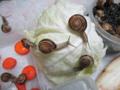 Snail, #A765