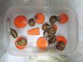 Snail, #A775