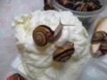 Snail, #A780
