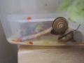Snail, #A836