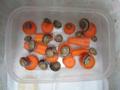 Snail, #B003