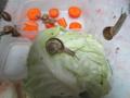 Snail, #B009