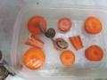 Snail, #B010