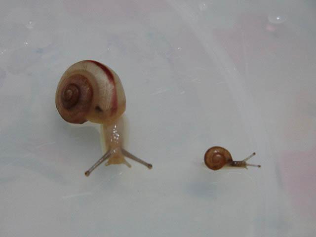 Snail, #B124 (Closeup)