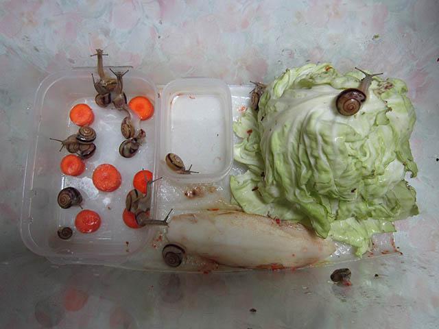 Snail, #B178